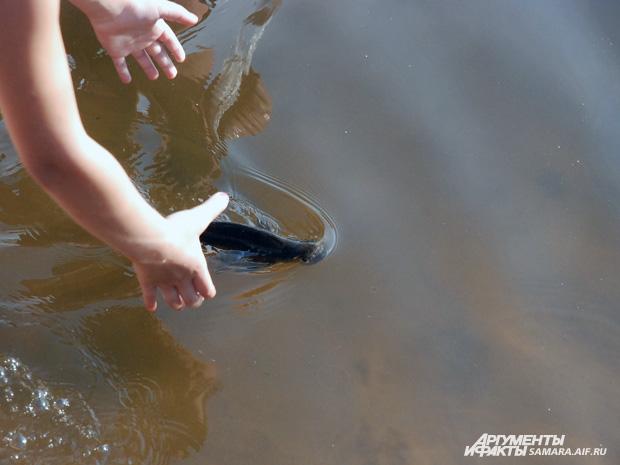 ловят рыбу руками фото